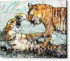 Playing Bengals Acrylic Print