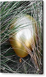 Acrylic Print featuring the photograph Playing Hide And Seek by Steve Taylor