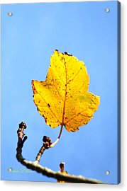 Acrylic Print featuring the photograph Playing Solitaire by Shana Rowe Jackson