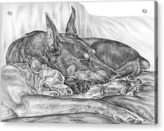 Pleasant Dreams - Doberman Pinscher Dog Art Print Acrylic Print by Kelli Swan