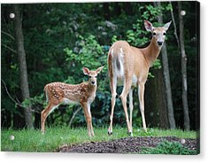 Please Dont Shoot Acrylic Print by Kathy Gibbons
