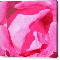 Pleasingly Pink Acrylic Print