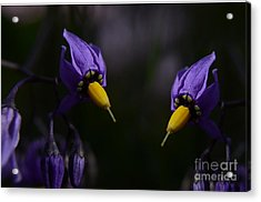 Pleasures Of Purple Acrylic Print by The Stone Age