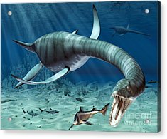 Plesiosaur Attack Acrylic Print by Roger Harris and Photo Researchers