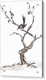 Plum Blossoms Acrylic Print by Ellen Miffitt