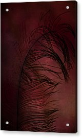 Acrylic Print featuring the photograph Plum Tickled by Robin Dickinson