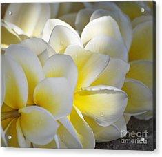 Plumeria Flower Lei Acrylic Print by Loriannah Hespe