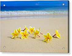 Plumerias On Beach II Acrylic Print