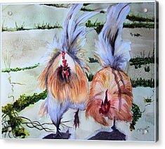 Plump Chickens Acrylic Print by Myrna Migala