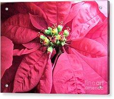 Poinsietta1 Acrylic Print by Tammy Herrin