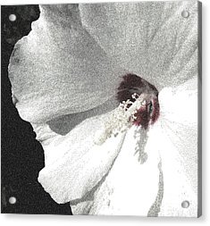 Pointillized Althea Flower Acrylic Print by Renee Trenholm