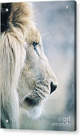 Poised Acrylic Print by Christopher Griffin