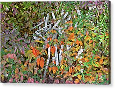 Poison Ivy And Pickets Acrylic Print