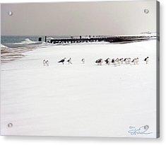Polar Bird Club Acrylic Print