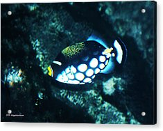 Polka Dot Fish Acrylic Print by DiDi Higginbotham