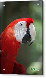 Acrylic Print featuring the photograph Polly by Patrick Witz