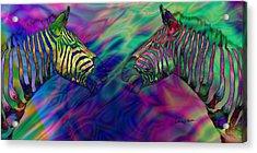 Polychromatic Zebras Acrylic Print by Anthony Caruso