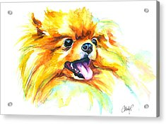 Pomeranian Fire Acrylic Print