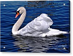 Pond Beauty  Acrylic Print