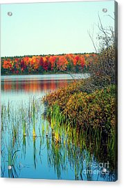Pond In The Woods In Autumn Acrylic Print