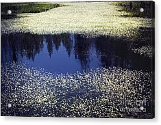 Pond Of Blooms Acrylic Print by Janie Johnson