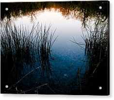 Pond Reflections Acrylic Print by Susan Adams