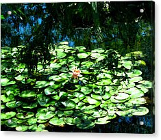Pond With With Pond Lilly Acrylic Print by David Killian