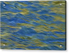 Acrylic Print featuring the photograph Ponderosa Abstract 2   by Sherri Meyer