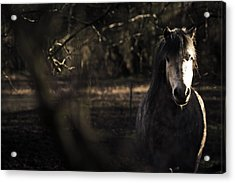 Pony In The Brambles Acrylic Print