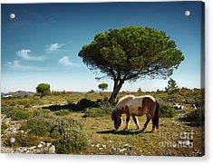 Pony Pasturing Acrylic Print by Carlos Caetano