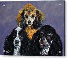 Poodles Acrylic Print by Stan Hamilton