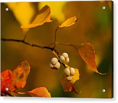 Acrylic Print featuring the photograph Popcorn Tree by Dan Wells