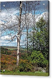 Acrylic Print featuring the photograph Poplar Witness by Christian Mattison