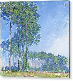 Poplars Acrylic Print by Claude Monet