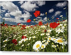 Poppies Acrylic Print by Lucie Averill