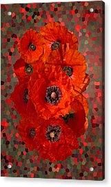 Poppies Acrylic Print by Nigel Chaloner