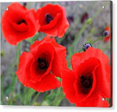 Poppies Of Stone Acrylic Print by Empty Wall