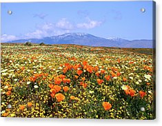 Poppies Over The Mountain Acrylic Print by Peter Tellone