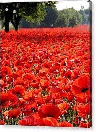 Poppies  Acrylic Print by Tammy Cantrell