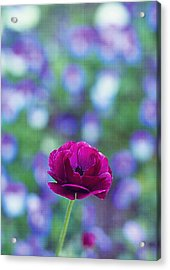 Popping Out Purple Acrylic Print by Rebecca Robinson