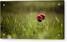 Popping Red Acrylic Print by Victor Bezrukov