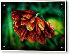 Poppy Art Acrylic Print by Jennifer Kosminskas
