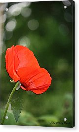 Acrylic Print featuring the photograph Poppy Dreams by Penny Hunt