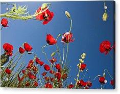 Poppy Field Acrylic Print by Ayhan Altun