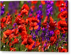 Acrylic Print featuring the photograph Poppy Field by Emanuel Tanjala
