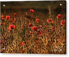 Poppy Fields Acrylic Print by Clare Scott