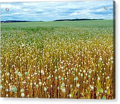 Poppy Fields Forever Acrylic Print by Rdr Creative