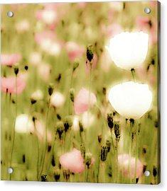 Poppy Fields Acrylic Print by Luigi Masella