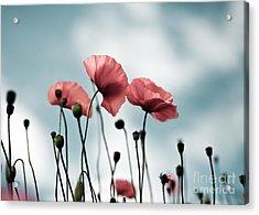 Poppy Flowers 07 Acrylic Print