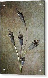 Poppy Seed Cases Acrylic Print by Debra Kelday